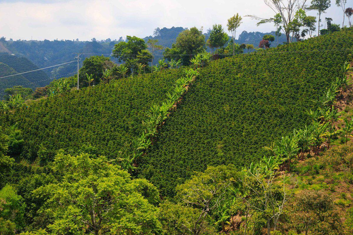 Balade entre montagnes et cultures de café