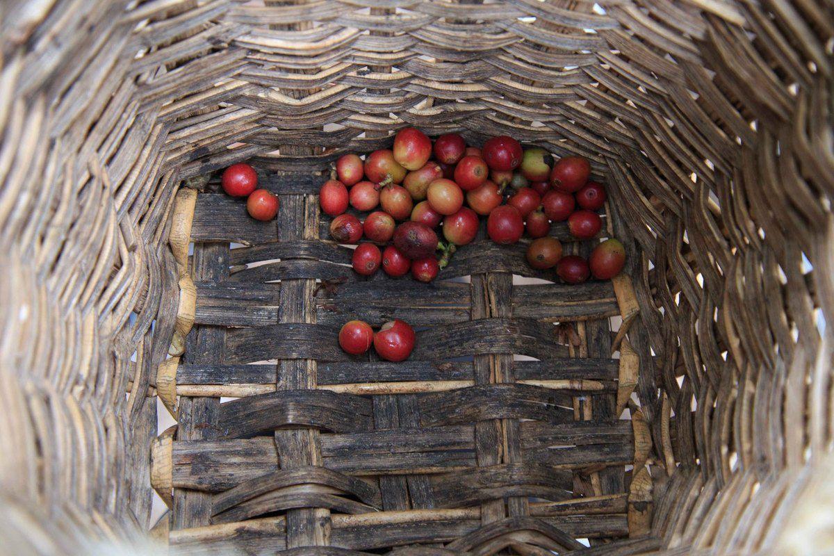 Plantation, visite et récolte