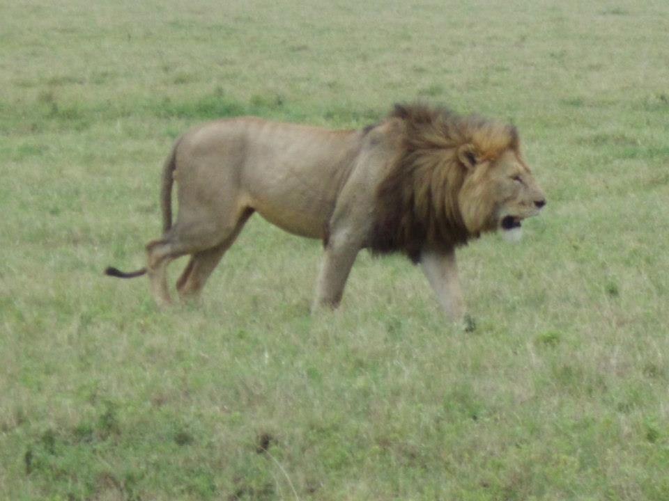 Le cratère du Ngorongoro : l Arche de Noé