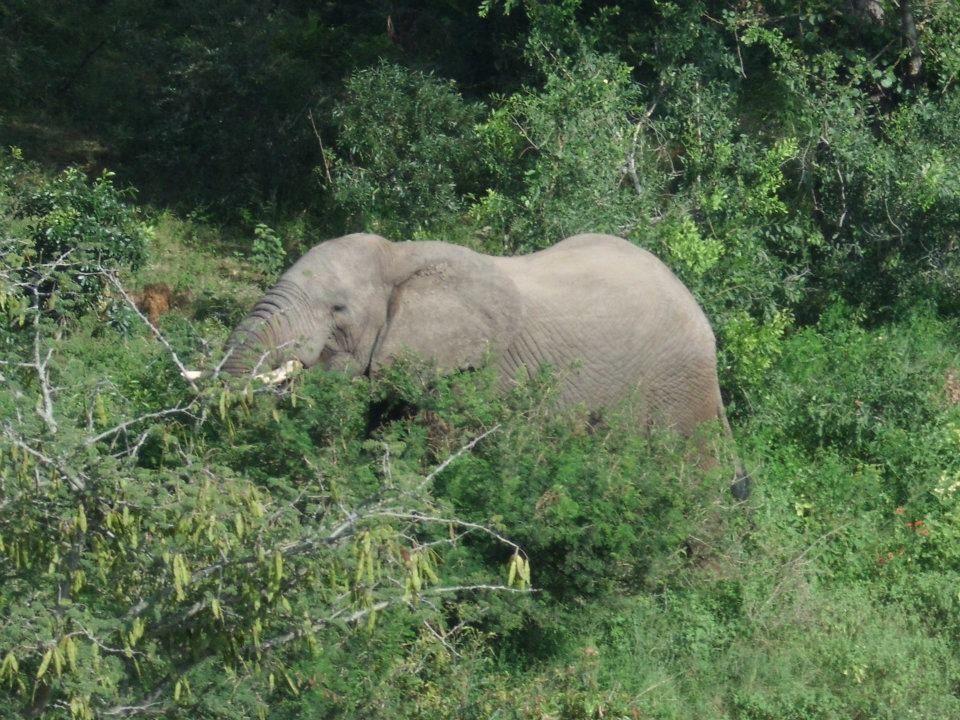 Durban , Parcs Hluhluwe et Kruger