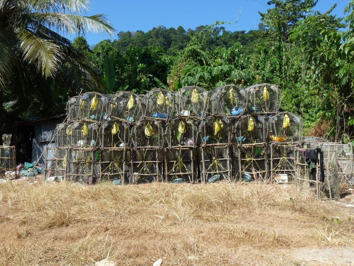 Koh Bulon Leh : village de pêcheurs à Mango Bay, mangrove de Panka Noi Bay et village Chaolai