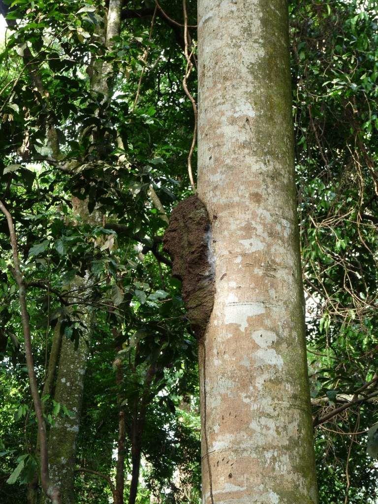 Sumatra / Bukit Lawang