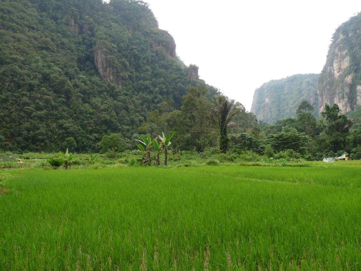 Sumatra / Vallée d'Harau
