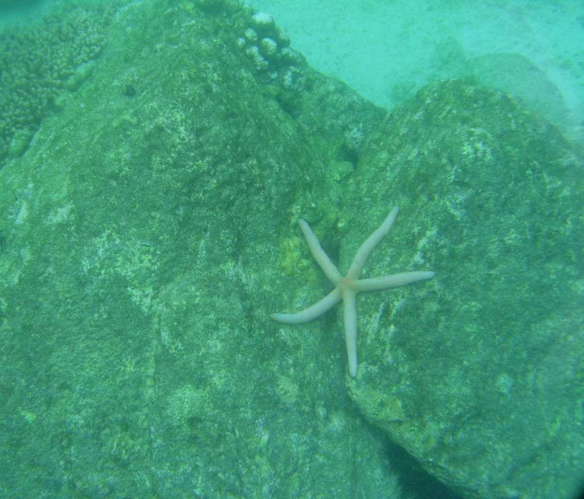 Sumatra / Pulau Weh : notre aire de snorkeling avec de belles rencontres (on a d'ailleurs retrouvé le Patrick de Bob l'éponge ;-). Le soir, belles tranches de barracuda