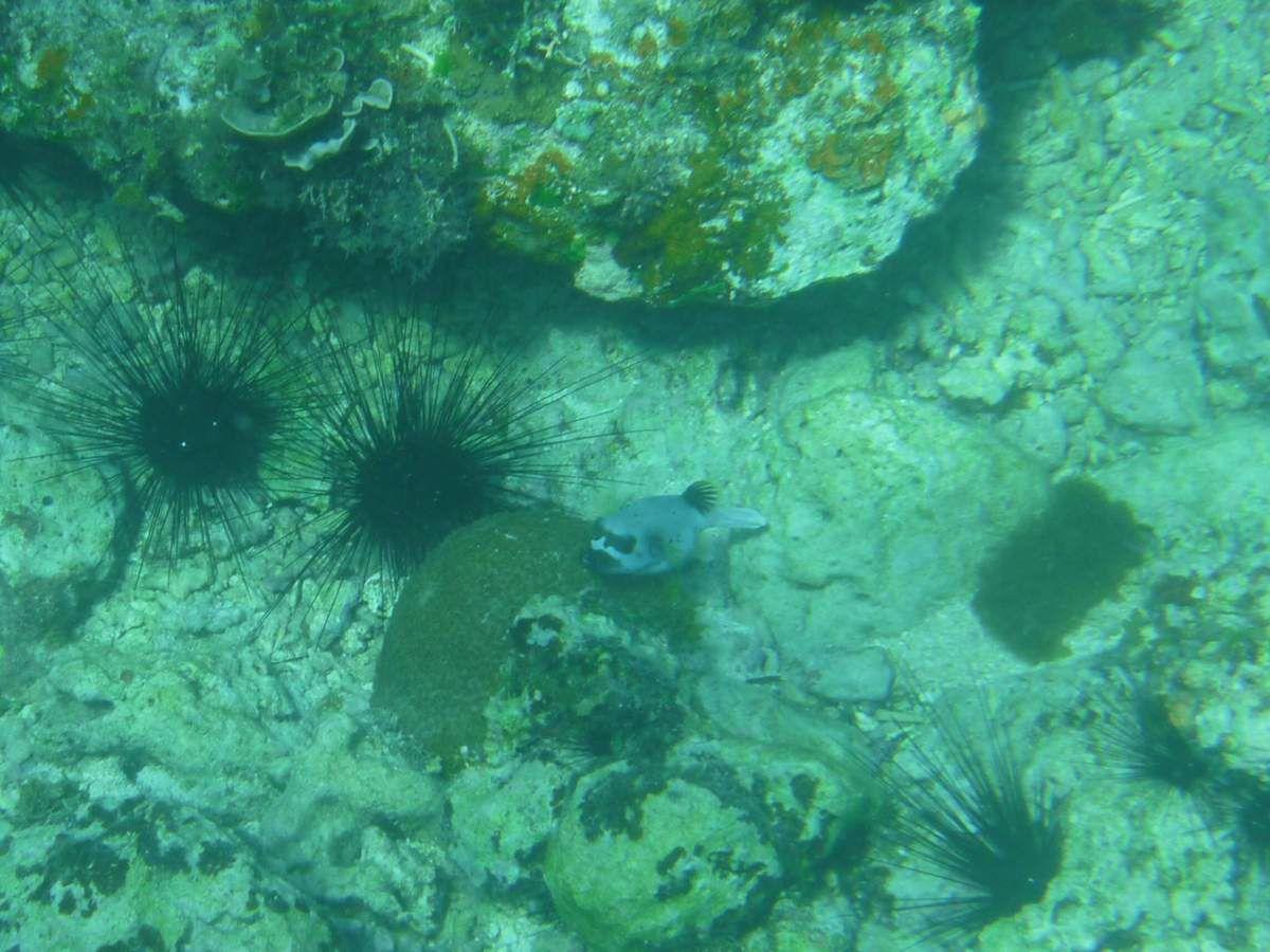 Île de Siquijor : sous l'eau et photos prises sur la route