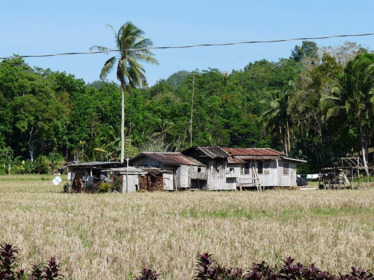 Philippines - Île de Bohol