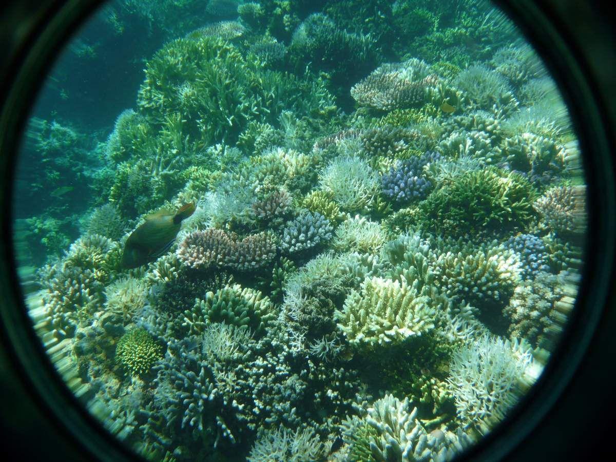 Kadidiri, snorkeling