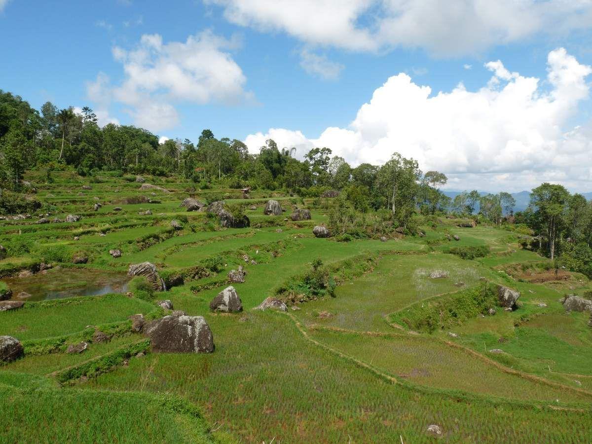 sur la route entre Batutumonga et Tikala