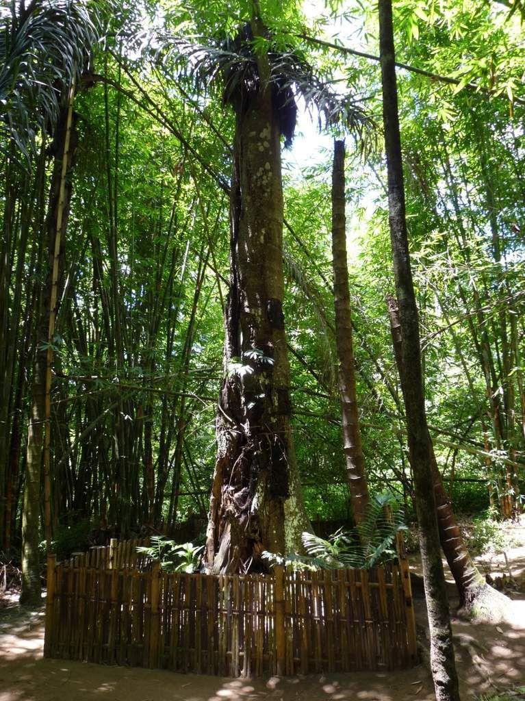 Kambira : les arbres où sont déposés les corps des nourissons