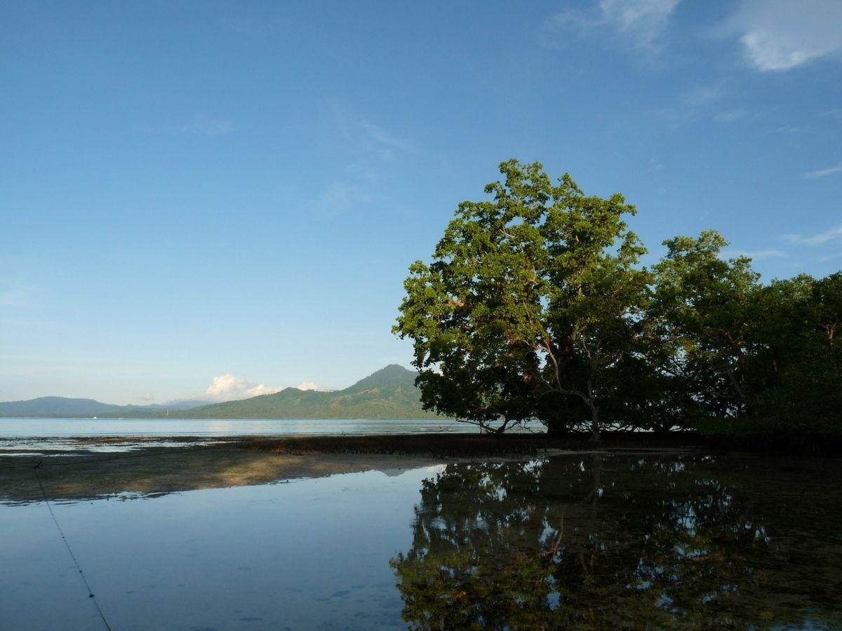 """Bunaken, notre pension, la """"plage"""" de mangrove"""