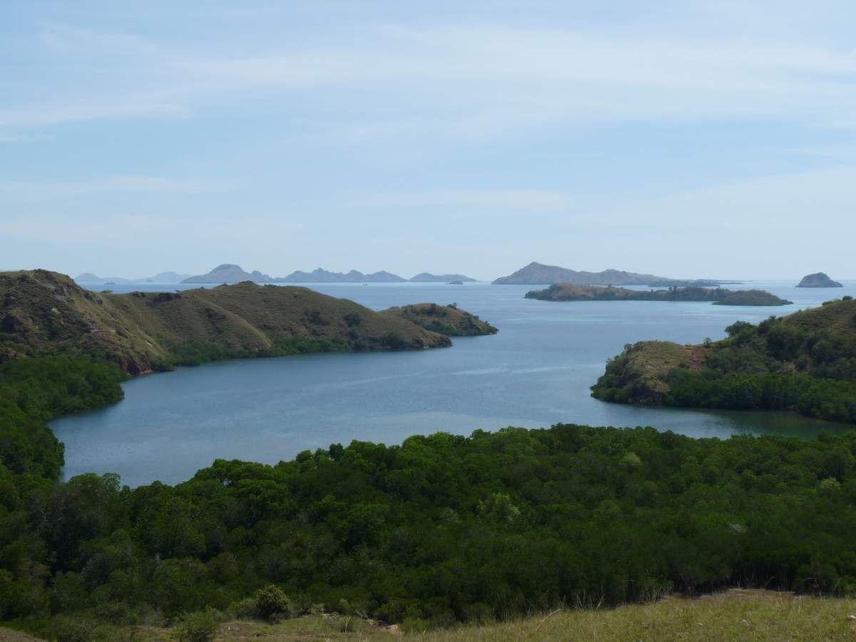 Pulau Rinca : les dragons de Komodo en plein effort ;-)