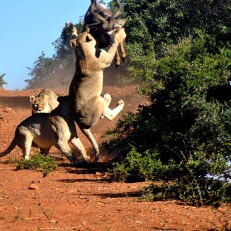 Call for radical policy reforms to save Tsavo from an ecological disaster