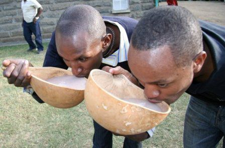 Cradle and culture: Revered Taita traditional brew being hunted into oblivion