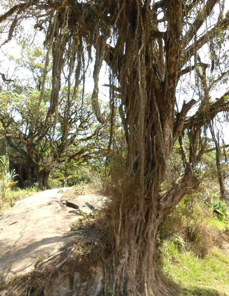 Cradle and culture:Mianja, the sacred rendezvous for Taita gods