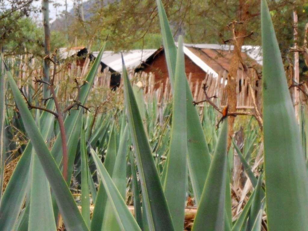 Time to return land aquired illegally,Taita leaders ask Teita sisal farm