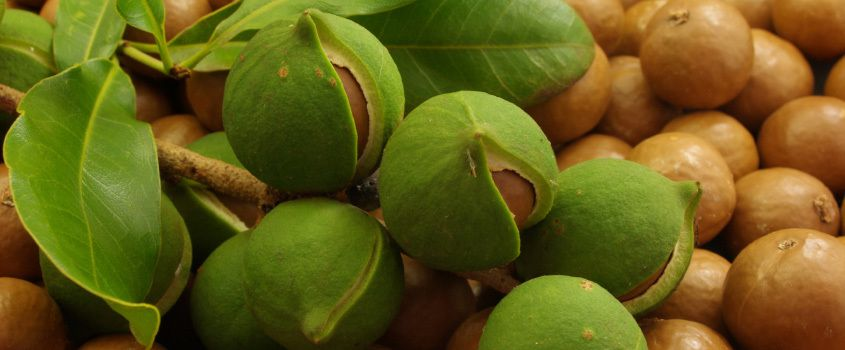 Going nuts:Taita-Taveta farmers set to reap big from macadamia