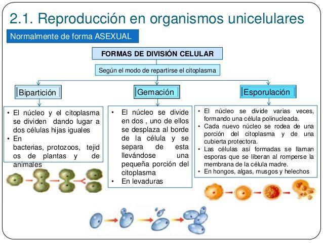 La reproduccion asexual de los seres vivos wikipedia
