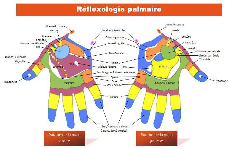 Favori Réflexologie PALMAIRE - Formation Massage Réflexologie YF07