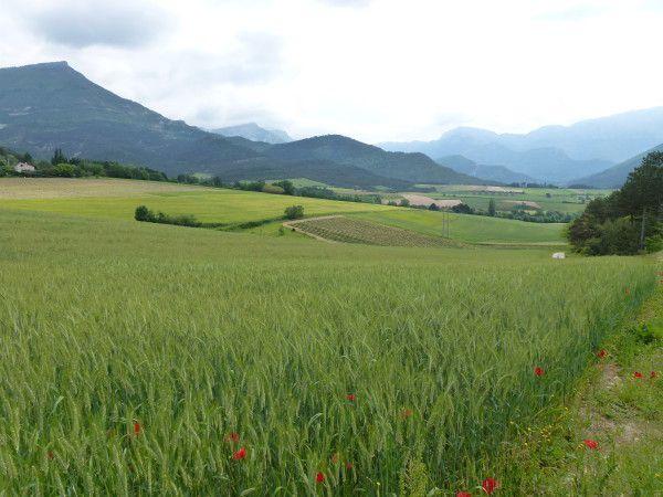 Et si un jour la lavande ne poussait plus en Provence?