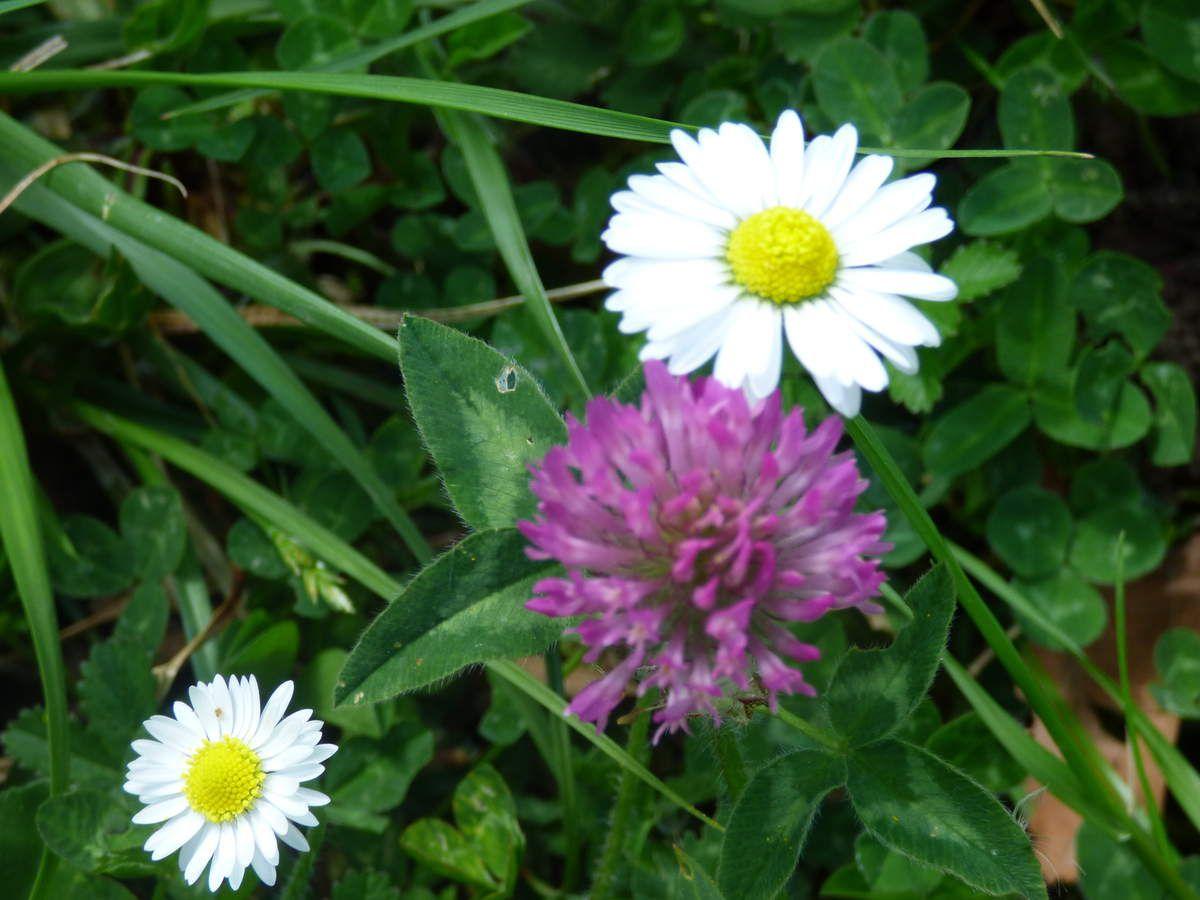 Dans un champs de fleurs.