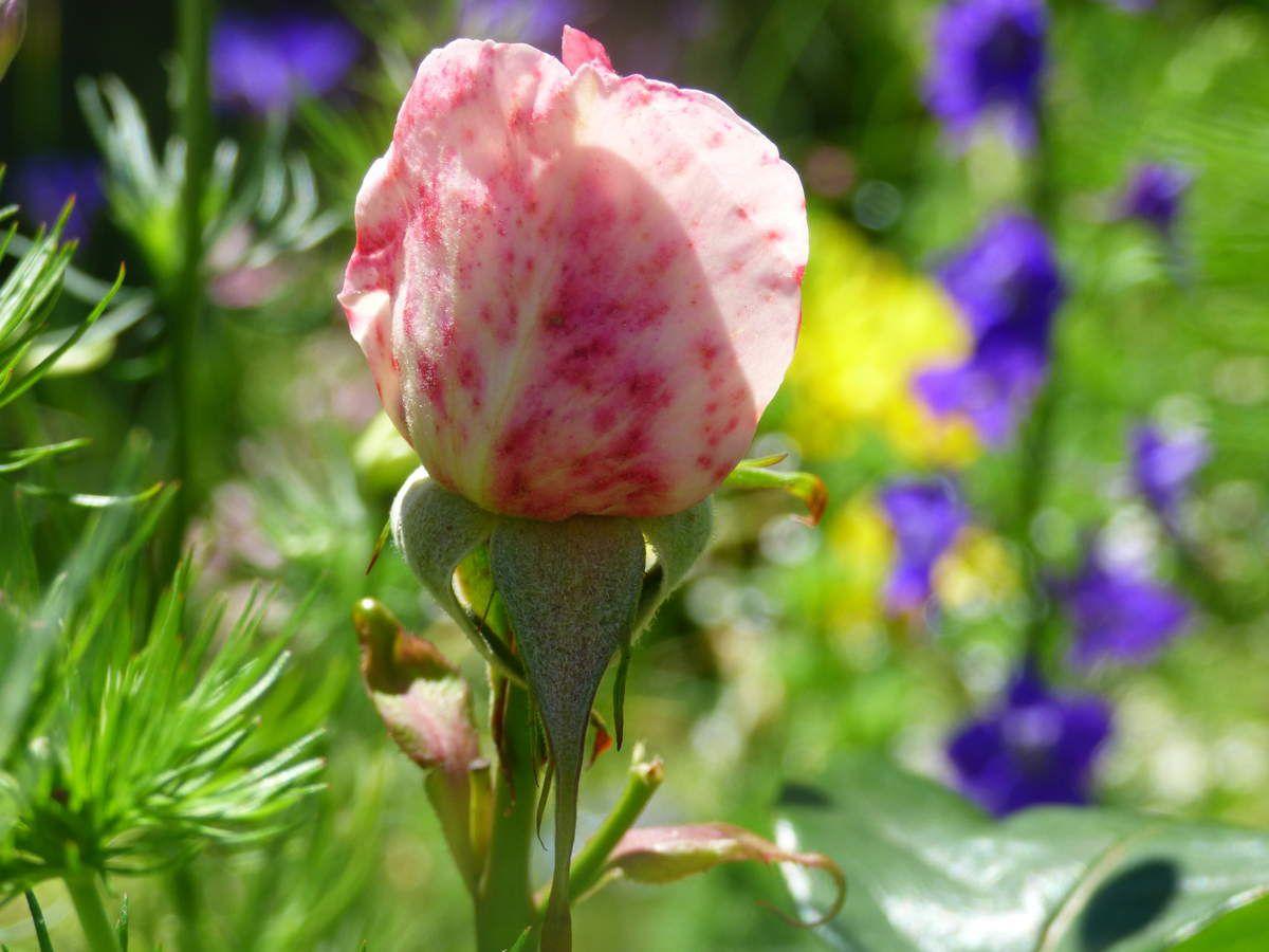 Fleurs couleur, fleurs passion.