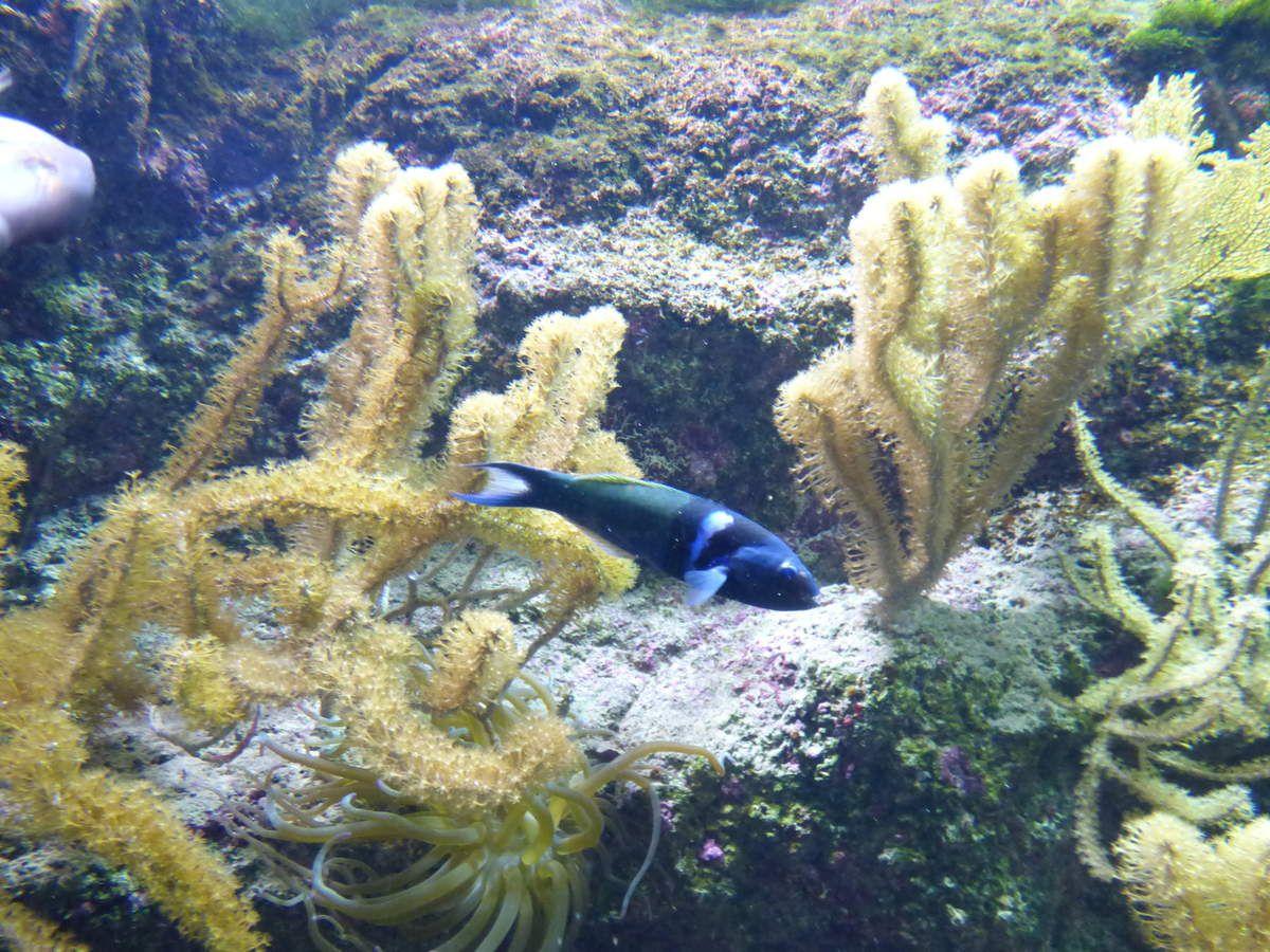 L'aquarium de Biarritz.