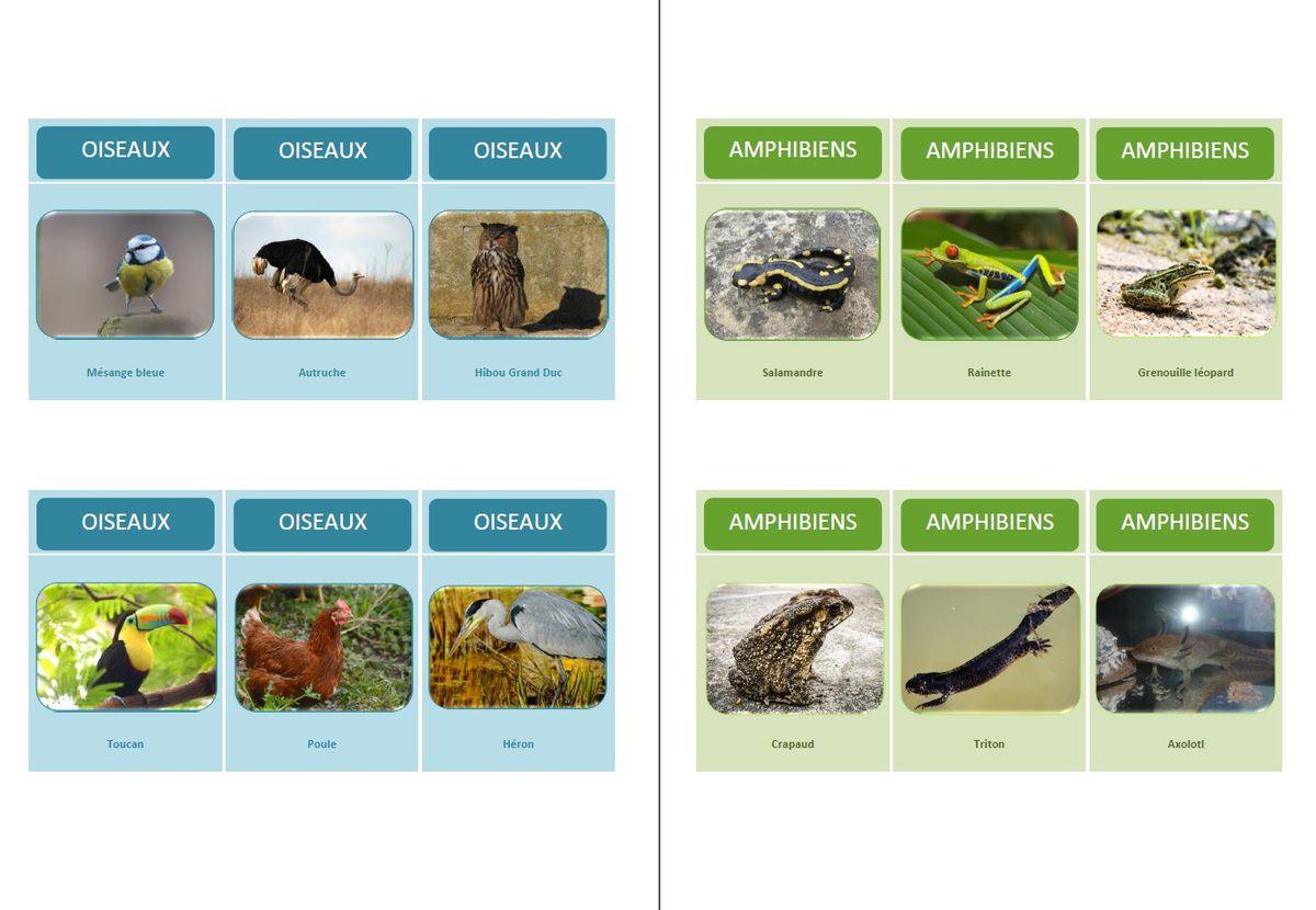 Jeu de 7 familles &quot&#x3B;classification des animaux&quot&#x3B;