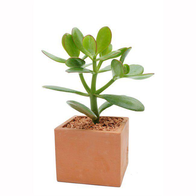Offrir un arbre: un cadeau original qui fait du bien