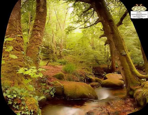 &quot&#x3B;Petit monde féerique au milieu des bois&quot&#x3B; Juillet 2016