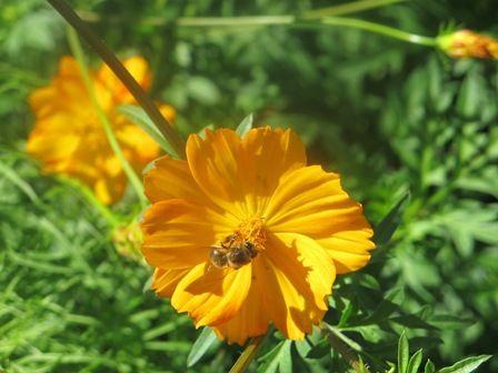 Septembre, 30 fleurs pour 30 jours