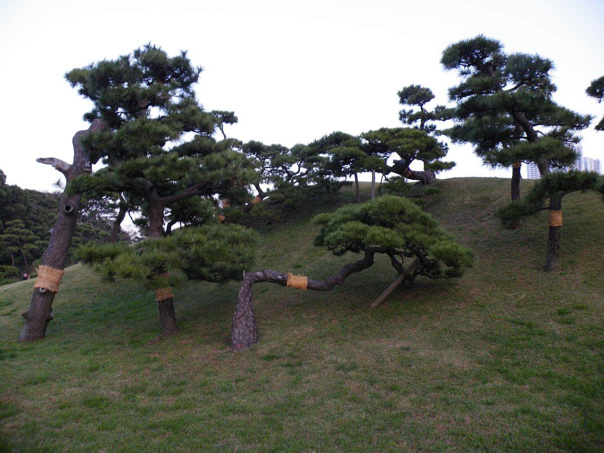 """Les arbres vieux et malades sont """"soignés"""""""