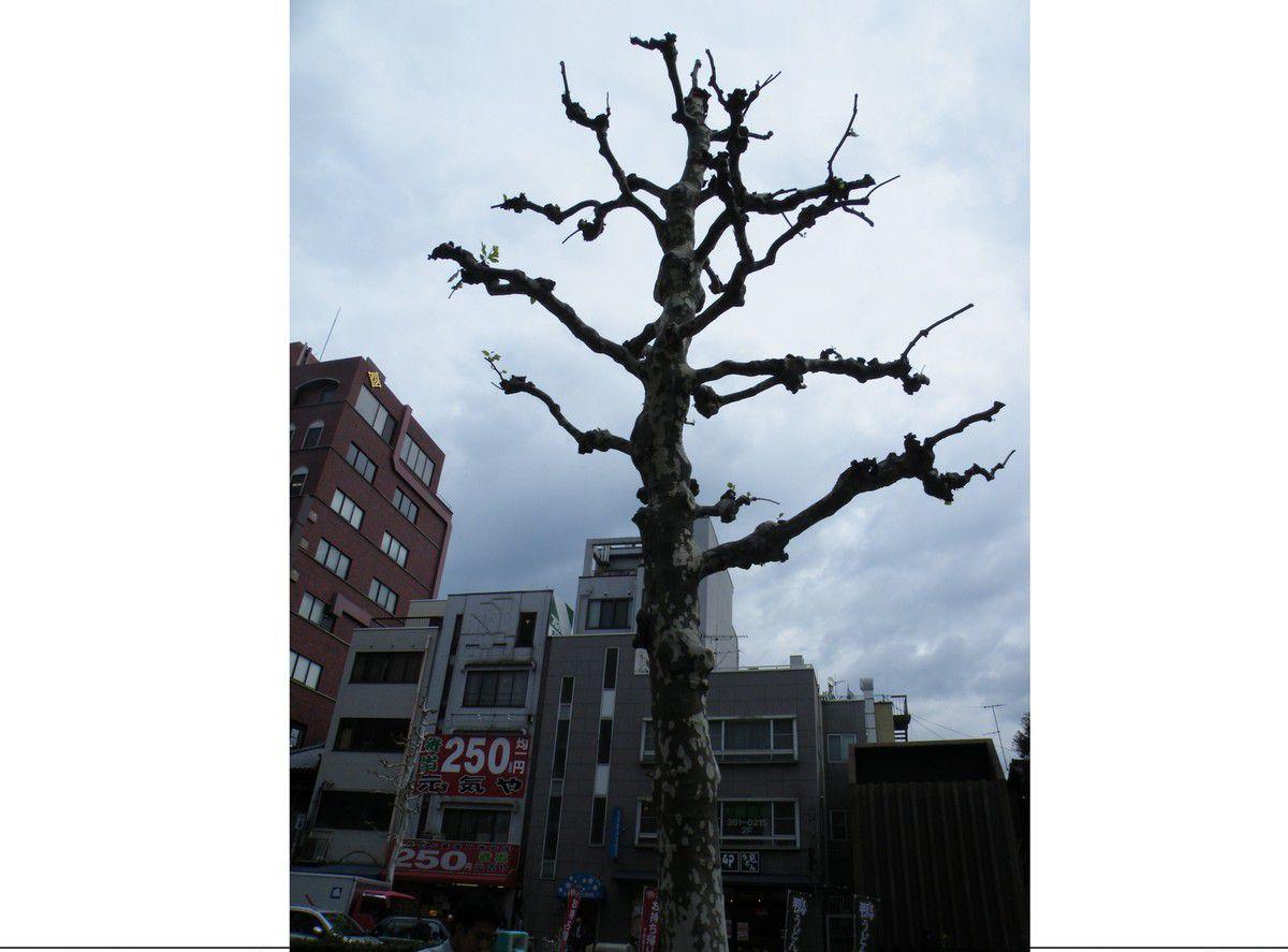 vavoirayeur : Japon-Kyoto