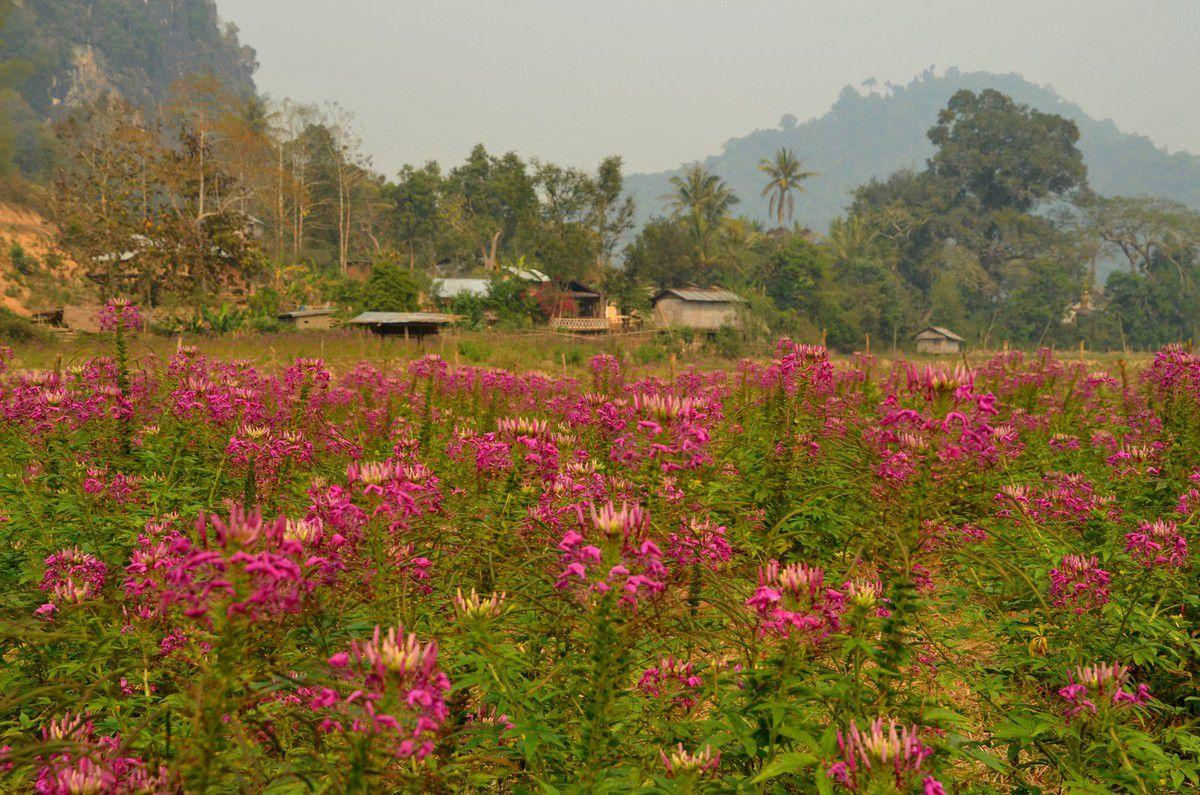 Les papillons sont nombreux et ont de belles couleurs vives dans cette région très fleurie.