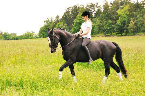 Apprendre monter a cheval le blog d 39 une cavali re - Monter son salon de the ...