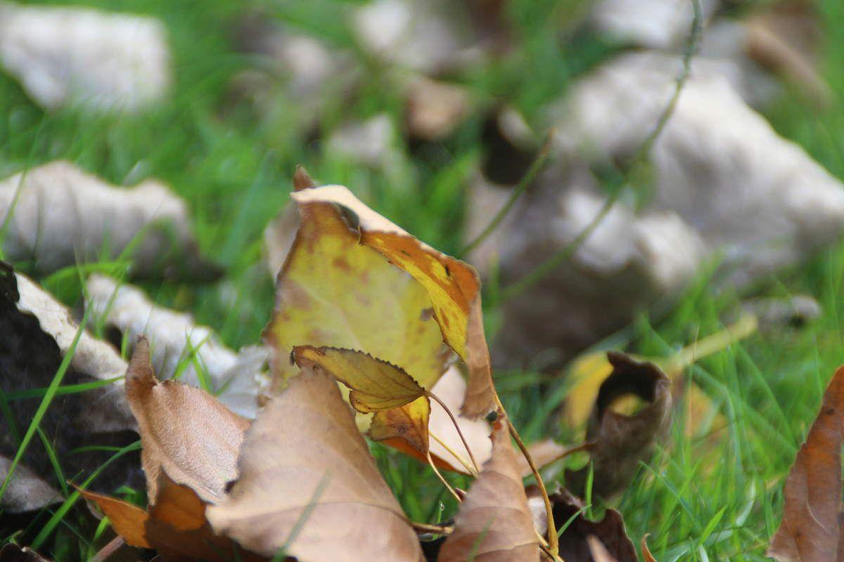 ~ Ce que j'aime en automne, mes indispensables ~