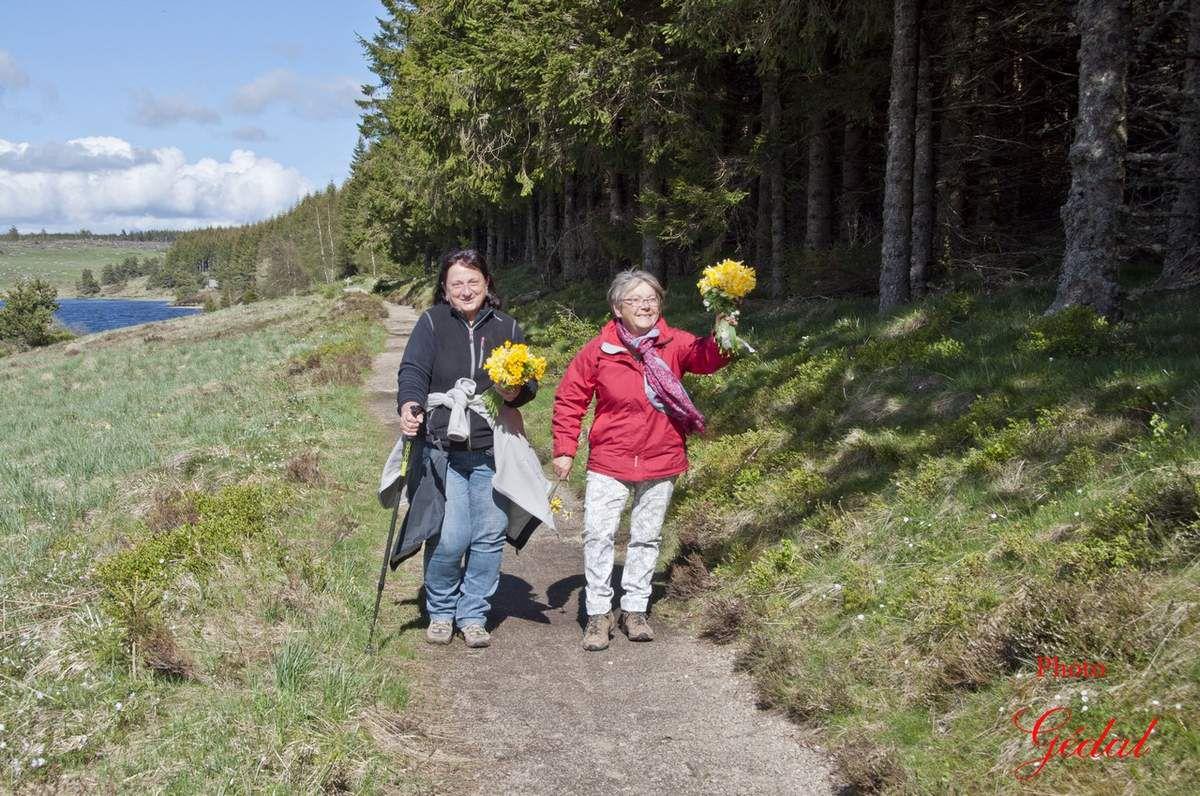 Mimimanouche et Nanedal et les bouquets de jonquilles.