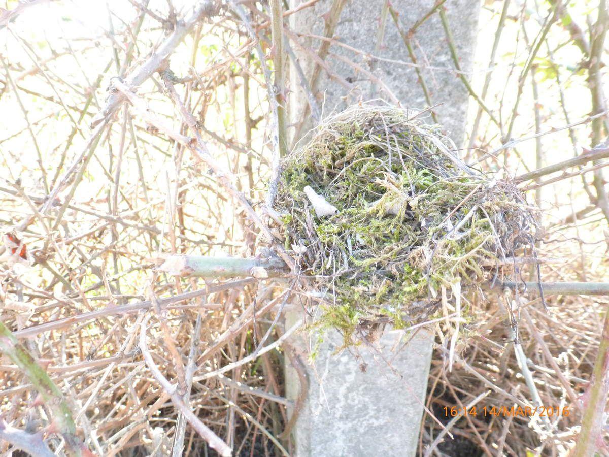 Trouvaille d'un nid.
