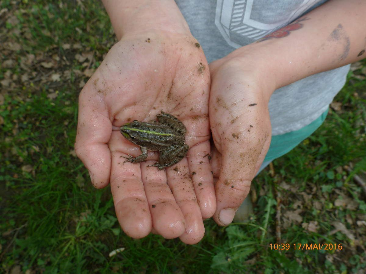Une amie grenouille...