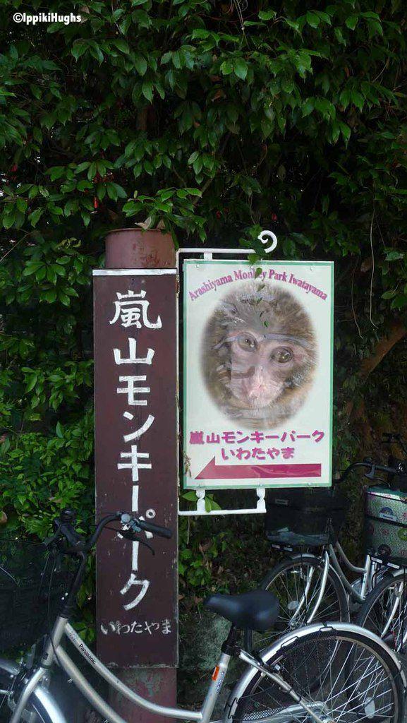 La montagne des singes (en liberté) à Arashiyama près de Kyoto!