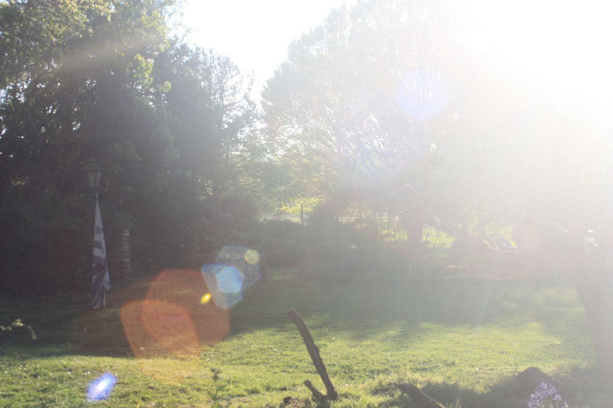 effet de lumière sur le jardin