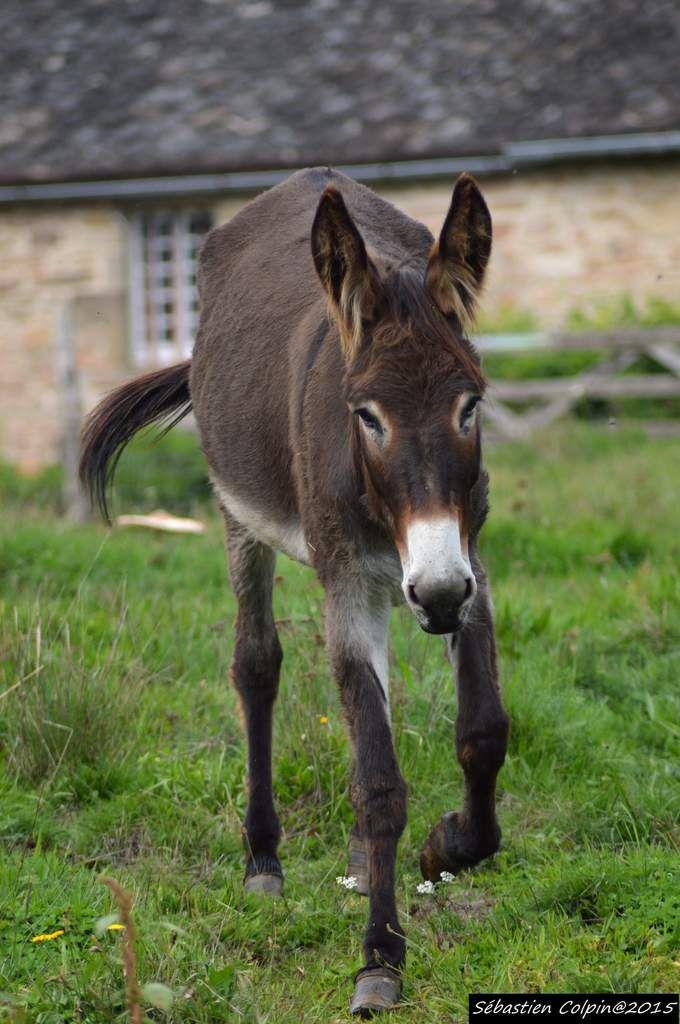Animaux de notre voisine Sophie à Vergonzac et en guest star, les ânes Oscar, Chippie et la dernière Choupette qui a 3 semaines...