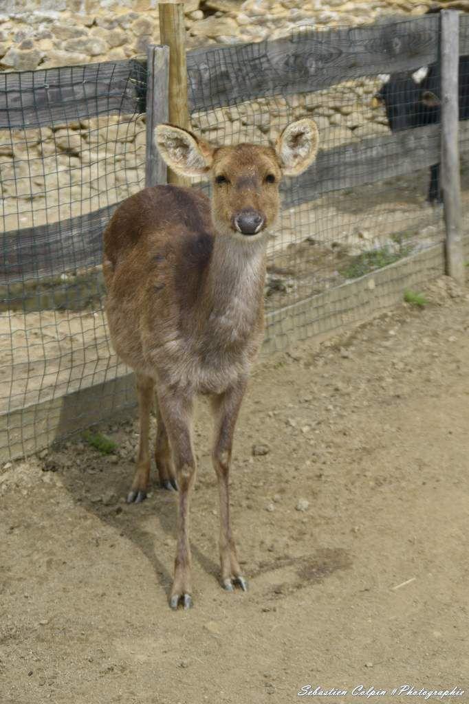 Parc Zoologique du Reynou à Le Vigen (87)