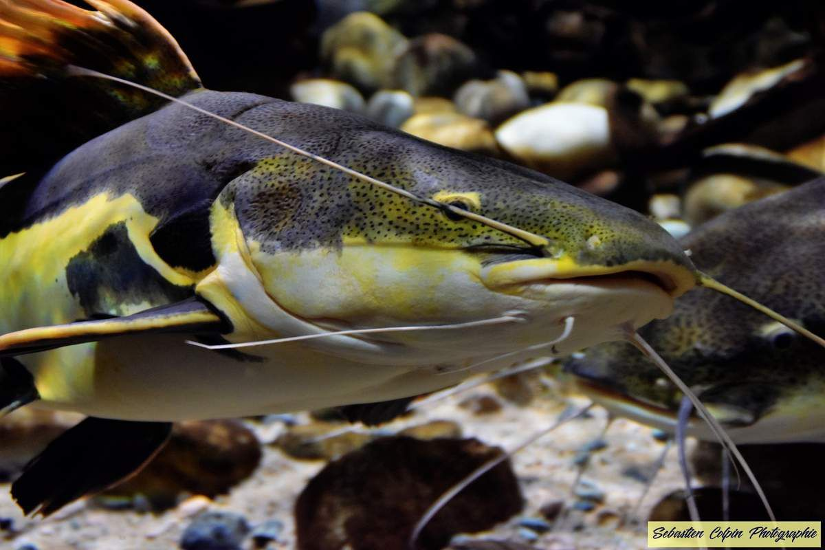 L'Aquarium du Limousin à Limoges