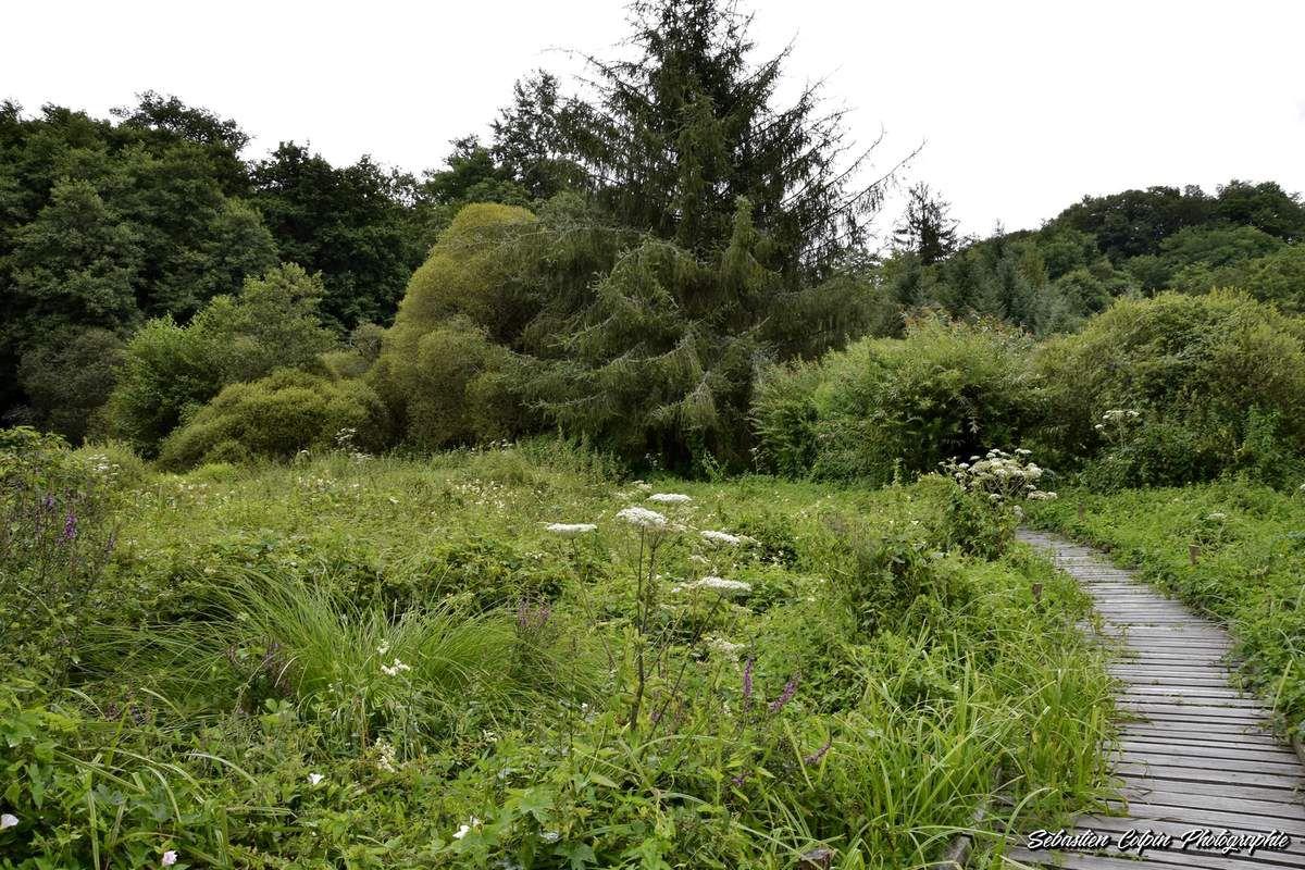 Le Marais du Brezou entre Lagraulière et Chanteix en Corrèze, un site naturel remarquable