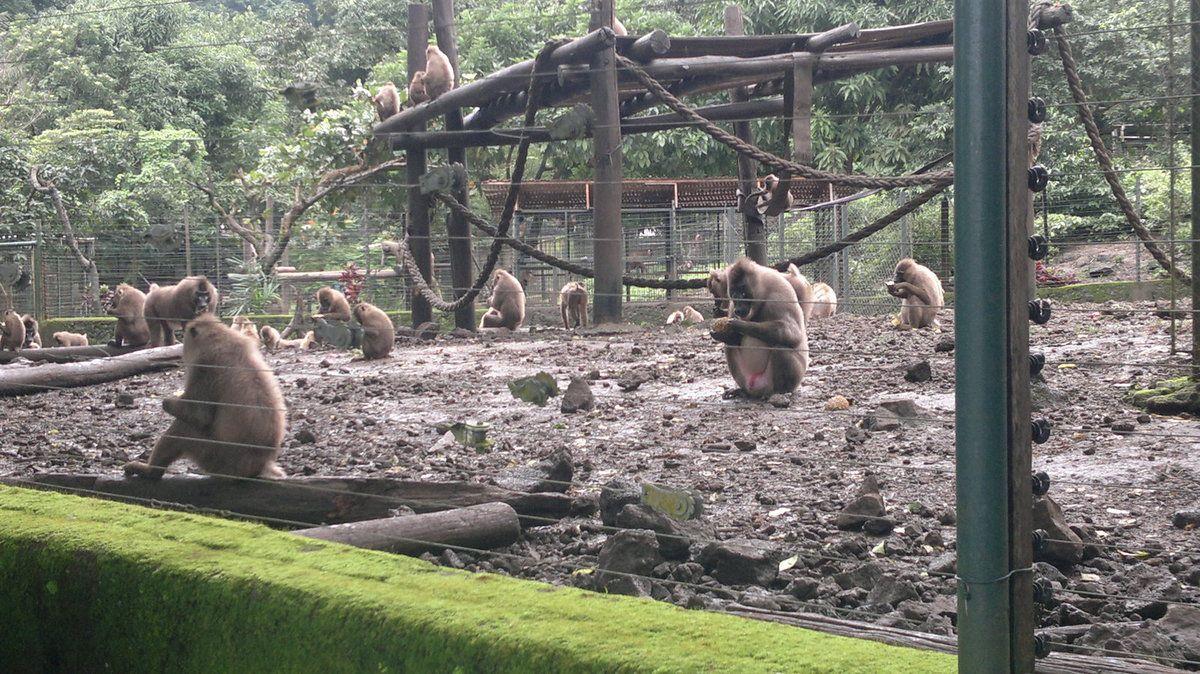 Visite du zoo et du jardin botanique de Limbe