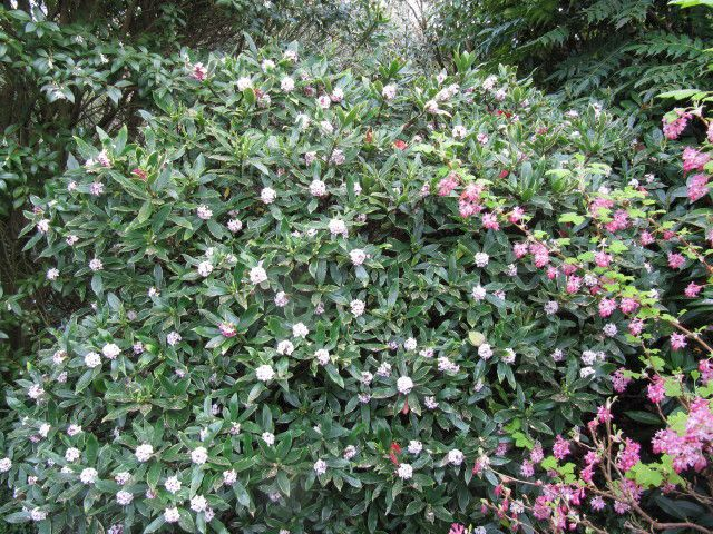 Arbustes au bonheur des plantes for Plantes ombre exterieur nord