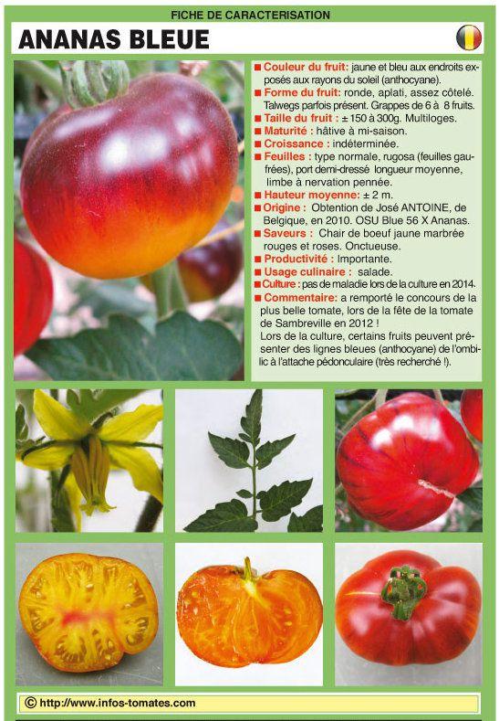 Tomates : la liste des espèces que j'ai choisies