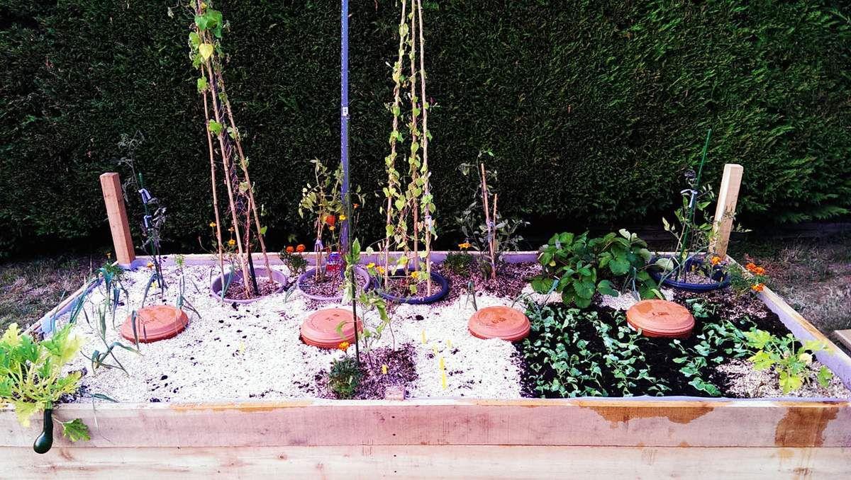 Le bac N°1, avec les plants de tomates toujours en pots, et le bac N°2, tout juste planté.