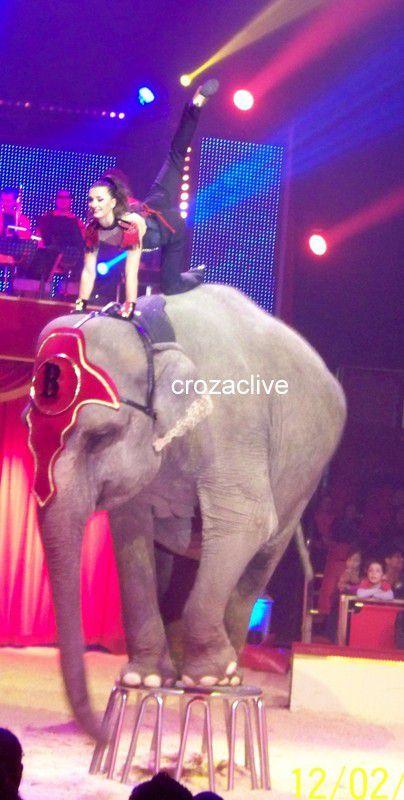 cirque BOUGLIONE : BRAVO