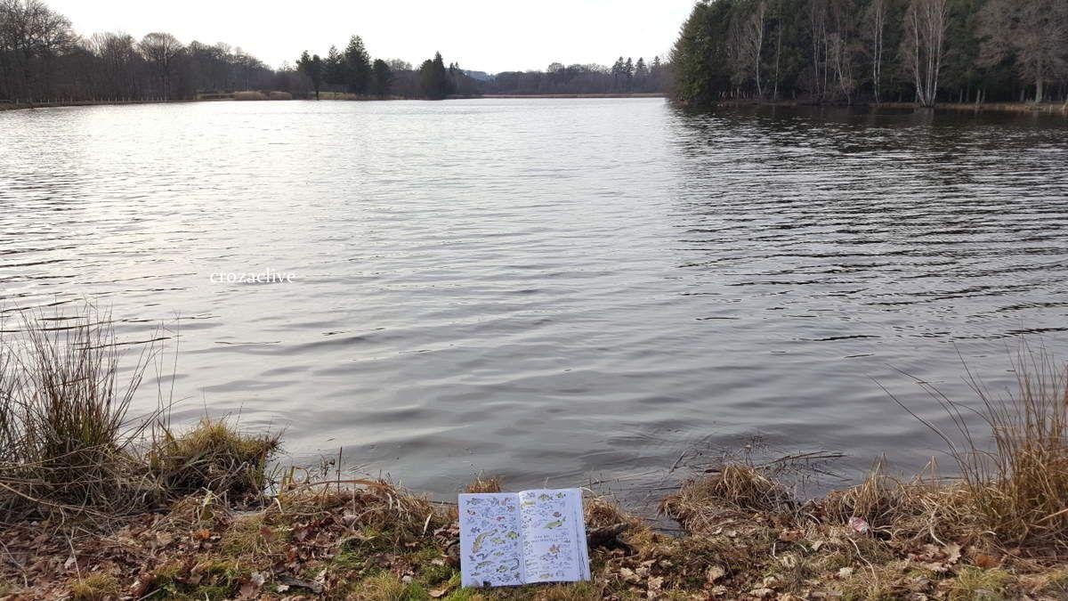 non, non, nous n'avons pas plongé...... il faut imaginer les poissons !!!!